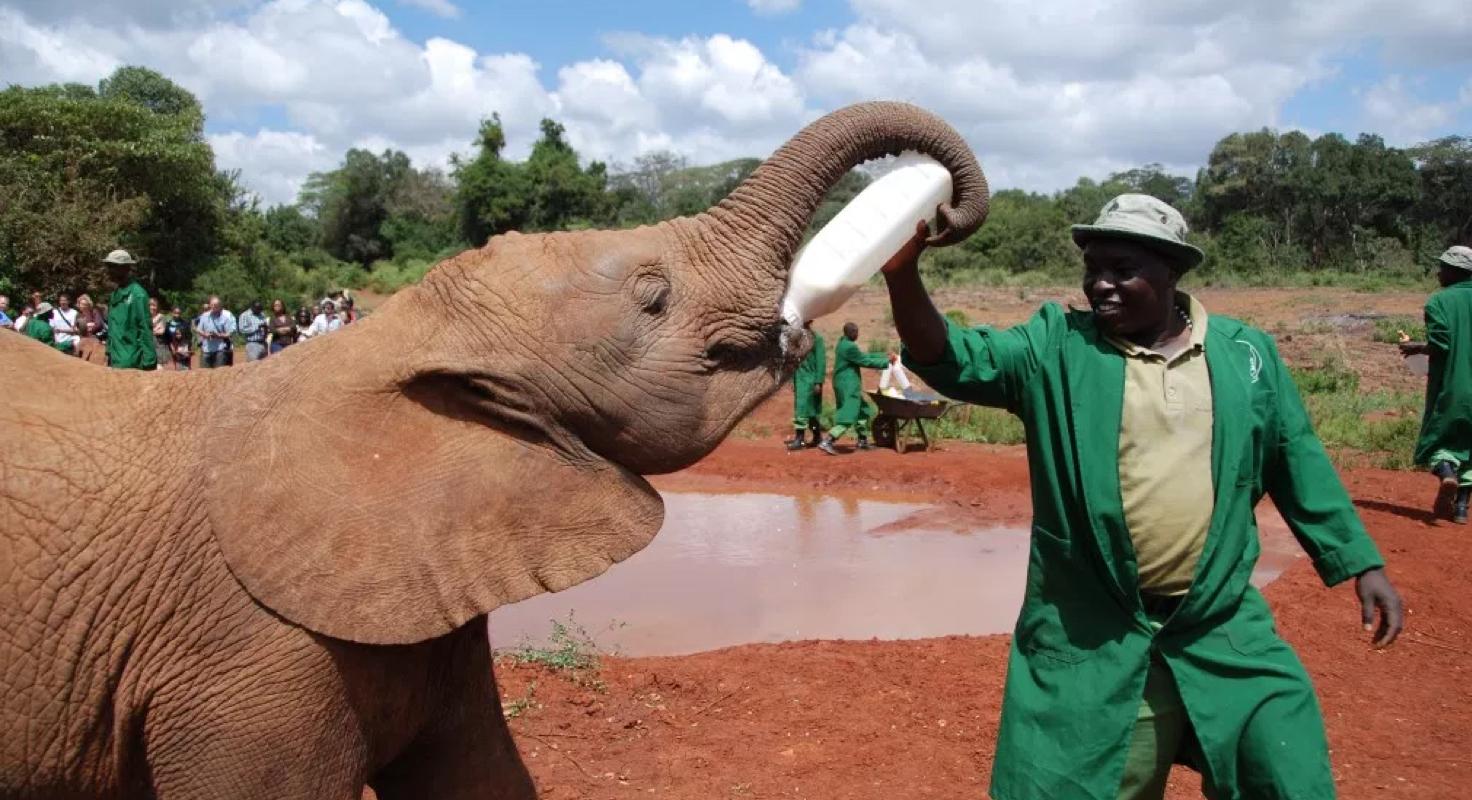 David Sheldrick Elephant & Rhino Orphanage image