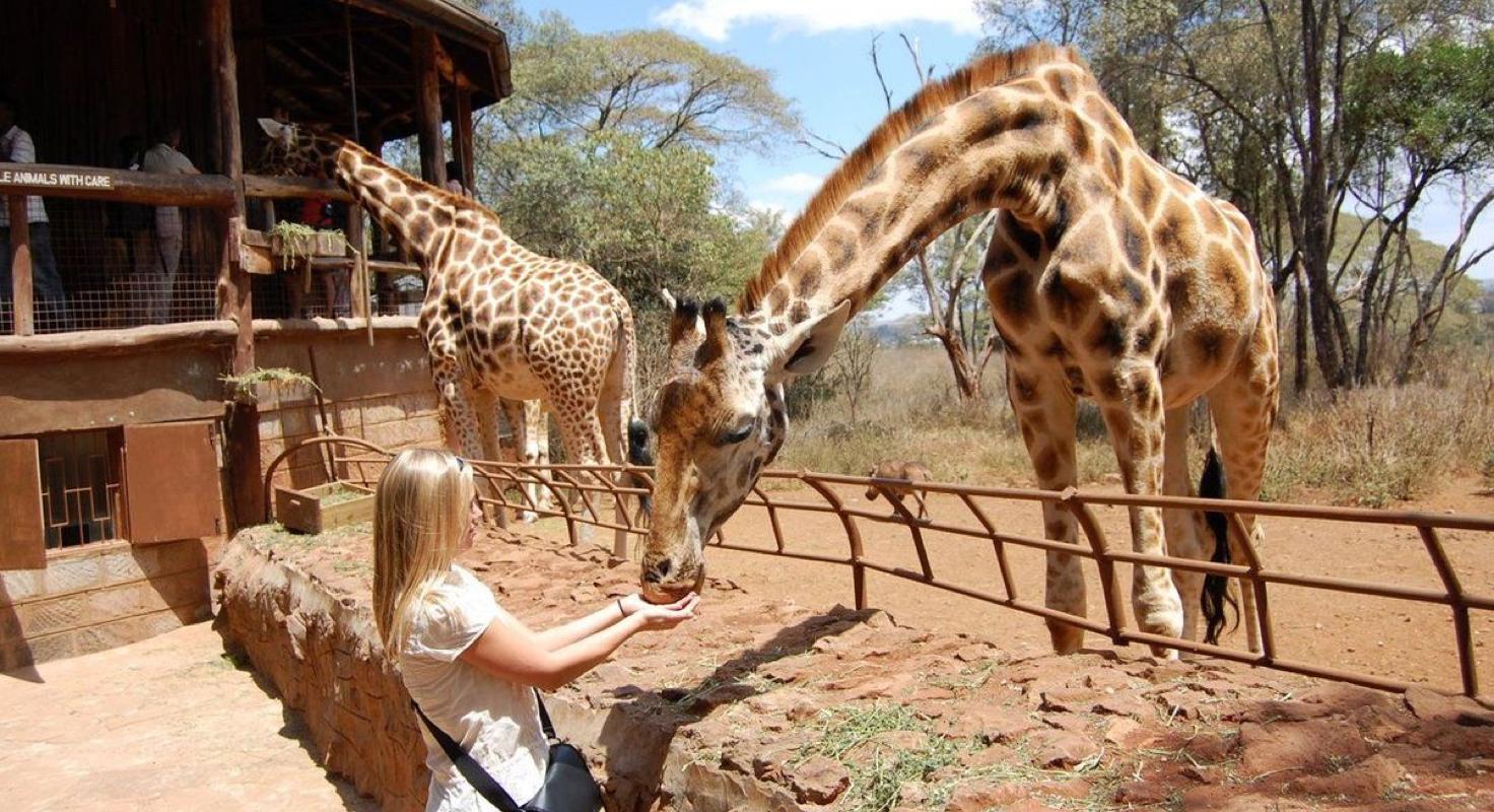 Giraffe Centre image