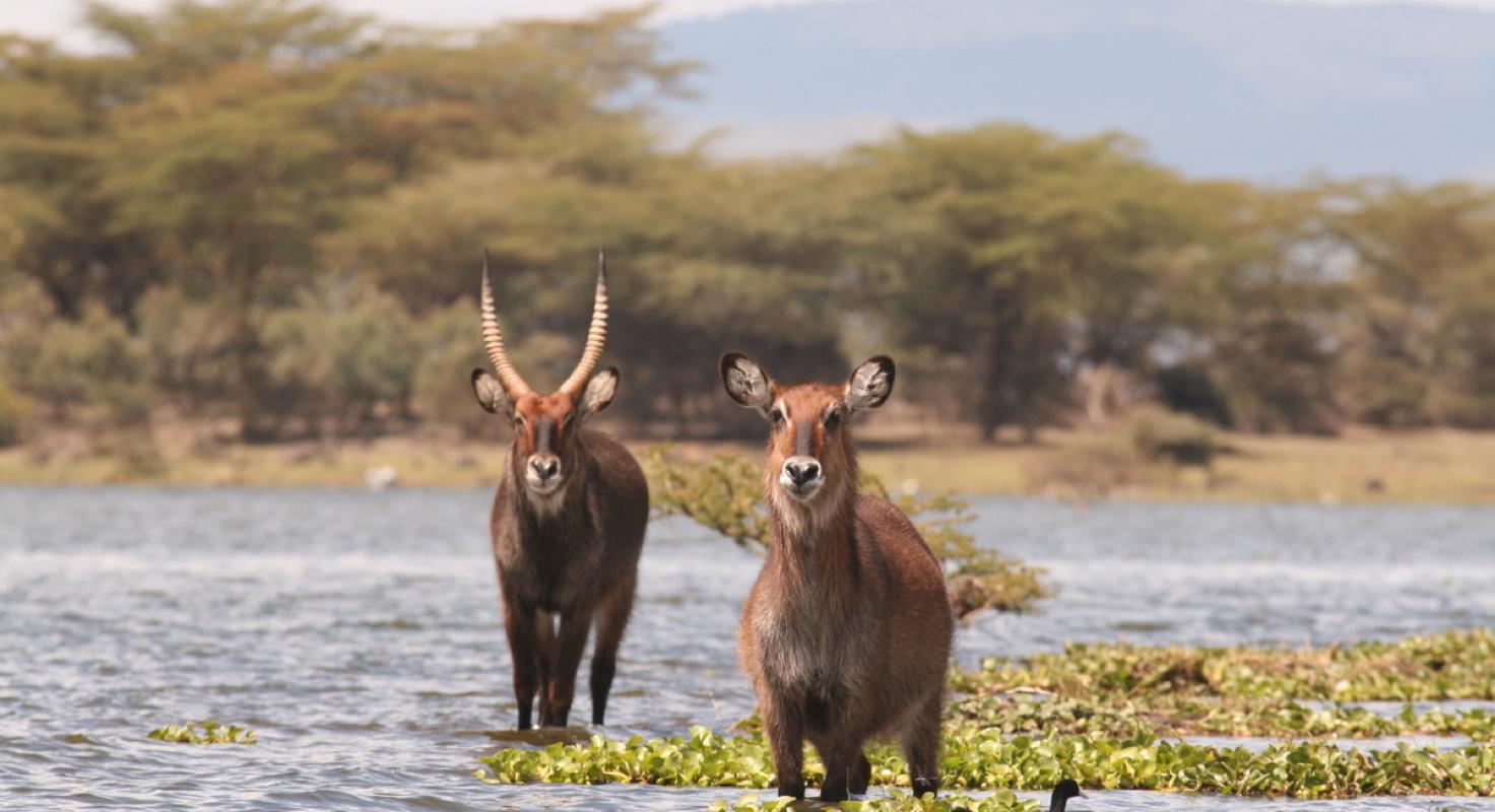 Lake Naivasha & Lake Nakuru image